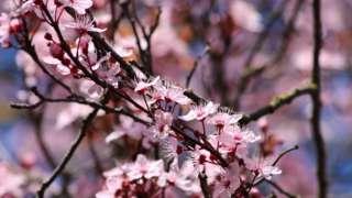 Flowers in bloom in Abingdon