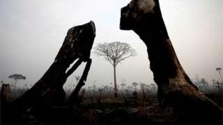 ఆగస్టు 24న అమెజోనాస్ రాష్ట్రంలోని బోకా డో ఎకర్లో అడవుల్లో కార్చిచ్చు తర్వాత కనిపించిన దృశ్యం