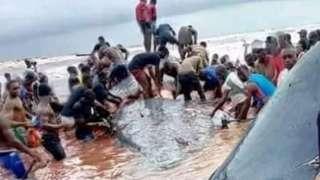 Pipo dey butcher di whale