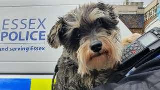 Suspected stolen dog