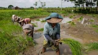 အာဏာသိမ်းမှုက လယ်သမားတွေကို ဘယ်လိုရိုက်ခတ်နေပြီလဲ