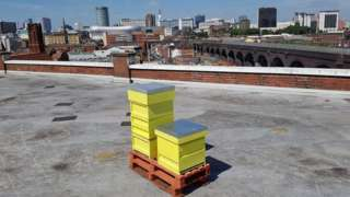The hive on the roof of the Custard Factory