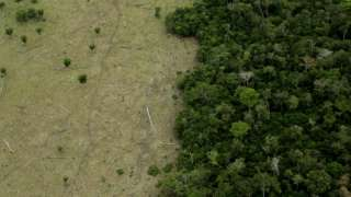 Felled trees in Mato Grosso state
