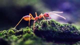 مورچهها، این موجودات سخت کوش شاید بهتر از هر جاندار دیگری بلدند در شرایط سخت و ناپایدار دوام بیاورند.