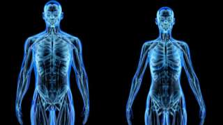 Anatomía de un hombre y una mujer.
