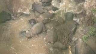 ఘటనా స్థలంలో ఏనుగుల కళేబరాలు