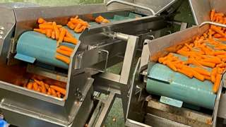 Carrot production at Alfred G Pearce