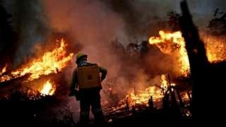 Funcionário do Ibama tenta apagar chamas na Amazônia