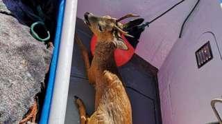 Deer lying in boat
