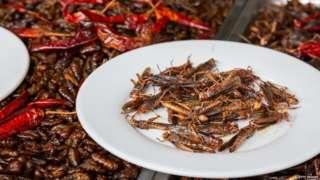 कई कंपनियां अब मानव उपभोग के लिए टिड्डियों और खाने के कीड़ों की खेती कर रही हैं
