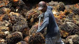 Man working on palm oil plantation
