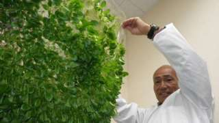 Yuichi Mori em sua plantação