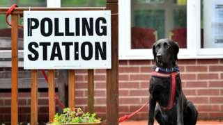 Dog by polling station sign