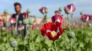 Мак и солнце - главные ресурсы экономики Афганистана