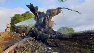 The destroyed tree