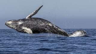 Whale wey dey inside ocean
