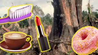 Lipstick, doughnut, coffee and toothbrush with toothpaste, superimposed on background of trees