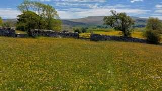 Bowberhead Farm meadow