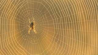 spiderweb close up