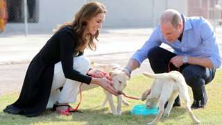 Catherine, Duchess of Cambridge and Prince William, Duke of Cambridge, play with golden labrador puppies Salto and Sky as they visit an Army Canine Centre, in Islamabad on 19 October 2019