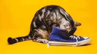 รูปแมวดมรองเท้า
