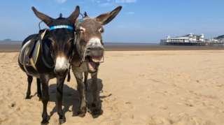 Donkeys on the beach at Weston-super-Mare