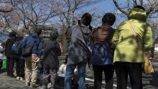 Residents return to look at cherry blossom
