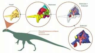 Thecodontosaurus diagram