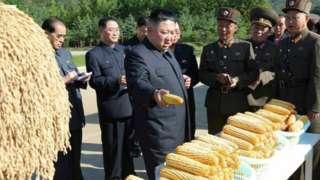 Kim Jong-un inspects crops in 2019