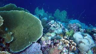 A coral reef crest in the Chagos Archipelago