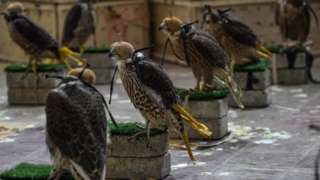 Falcons recovered in Pakistan