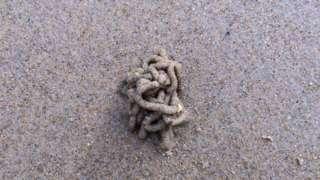 Lugworm cast