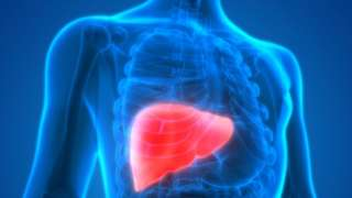 Ilustração mostra o fígado destacado dentro do corpo, em meio a ossos e outros órgãos