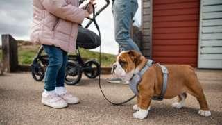 A little girl with a bulldog on a lead
