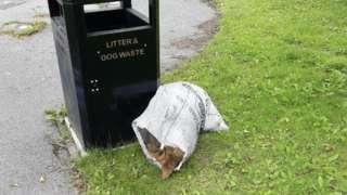 Dead dog in sack