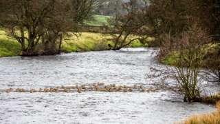 River Derwent Chatsworth deer
