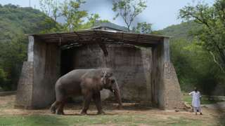 Kaavan with a caretaker at Marghazar Zoo in June 2016