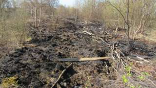 Destroyed wildlife habitat