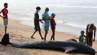 ၄ ကောင်သာ သေဆုံးခဲ့၊ ကျန် ဝေလငါး အားလုံးကို ကယ်ဆယ်နိုင်ခဲ့