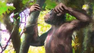 Büyük insansı maymunun böyle bir dış görünüşe sahip olduğu tahmin ediliyor