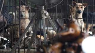 Các trang trại gây nuôi động vật hoang dã chung với các thú nhà tạo điều kiện cho virus corona lây lan giữa các loài với nhau