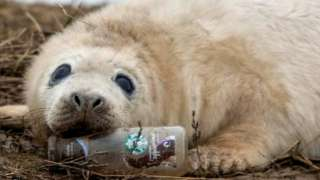 Seal chewing on plastic bottle