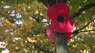 Poppy in tree