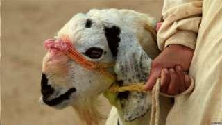 बकरी ईद