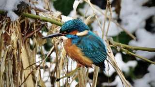 A Kingfisher bird sitting on a branch