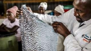CEO James Ambani shows a tanned fish skin.
