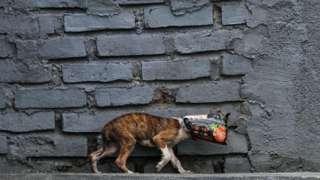 Cachorro com saco plástico na cabeça
