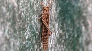A locust sits on a shade of a house in Delhi, India, 27 June 2020