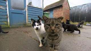 Some of the cats on the farm