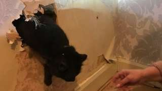 Cat climbing out of wall